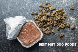 Wet dog foods Review