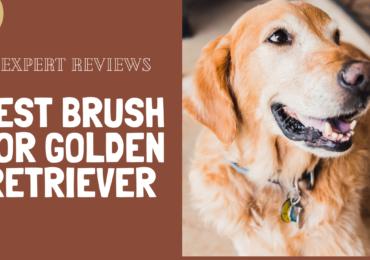 Best Brush for Golden Retriever – Expert Reviews 2021