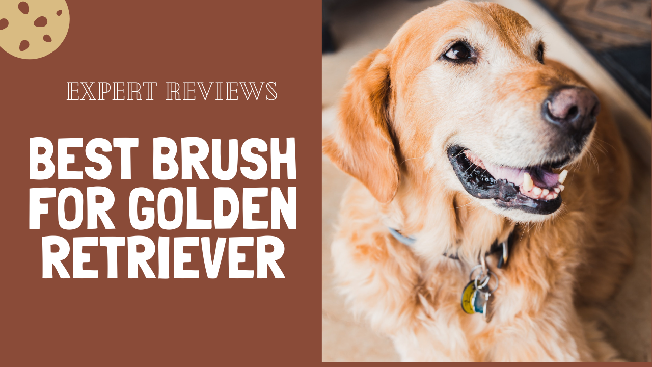 Best Brush for Golden Retriever – Expert Reviews 2021