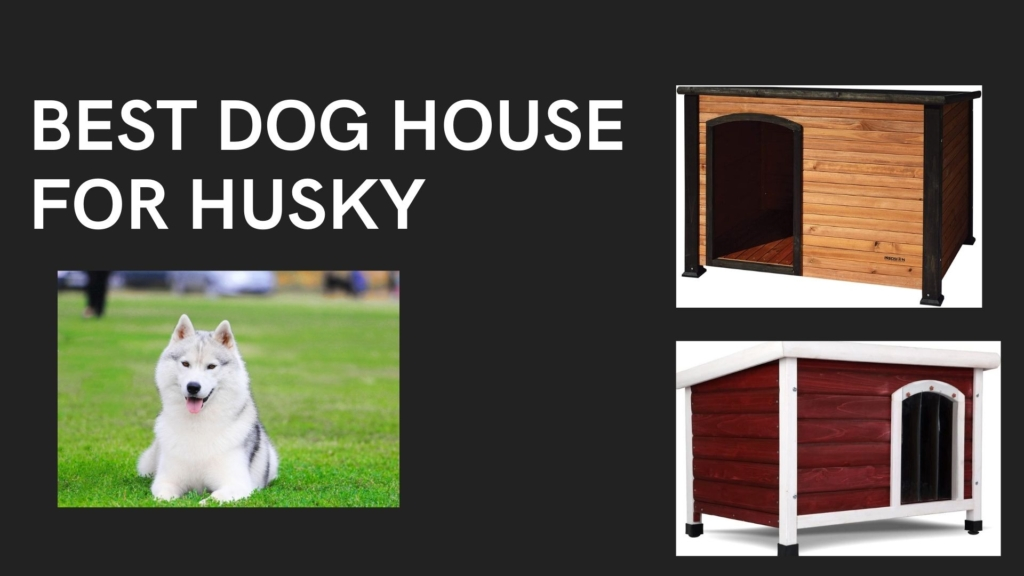 BEST DOG HOUSE FOR HUSKY