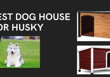 Best Dog House for Husky 2021