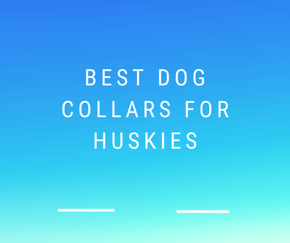 Best Shock Collars For Huskies 2021 – Reviews and Buying Guide